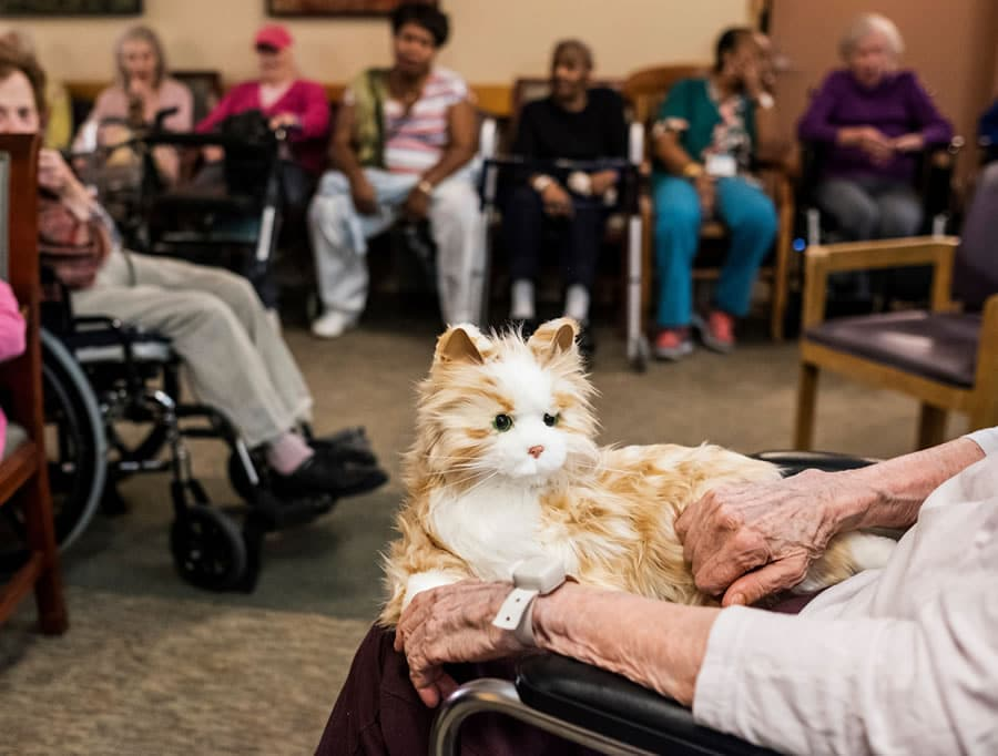 Robotic Dementia Cat
